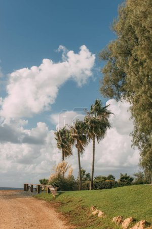 Photo for Sunlight on green palm trees near grass against blue sky with clouds - Royalty Free Image