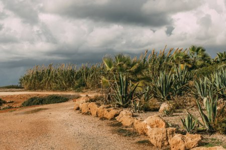 Photo pour Aloès vert et plantes fraîches contre le ciel gris - image libre de droit
