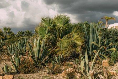 Photo pour Palmiers verts et feuilles d'aloès contre un ciel gris nuageux - image libre de droit