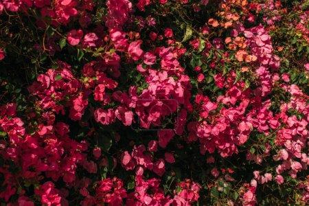 Foto de Luz solar sobre las hojas verdes cerca de las rosas y florecientes flores - Imagen libre de derechos