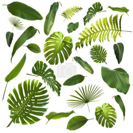Foto de Fondo de hojas de selva tropical - Imagen libre de derechos