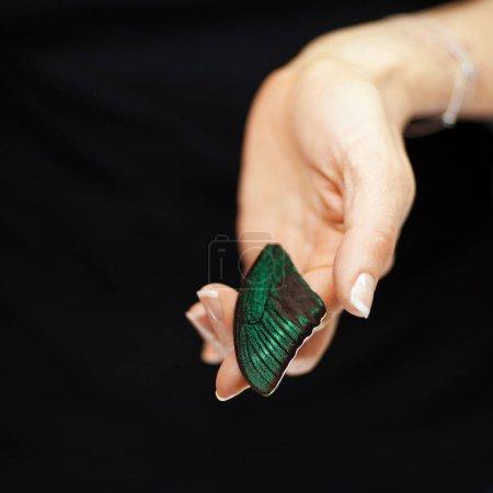 Photo pour Femme main tenant exotique aile papillon, sensuelle studio tourné avec fond noir - image libre de droit
