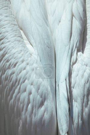 Photo pour Blanc tendre plume bouchent ange ailes peuvent être utilisés comme arrière-plan - image libre de droit