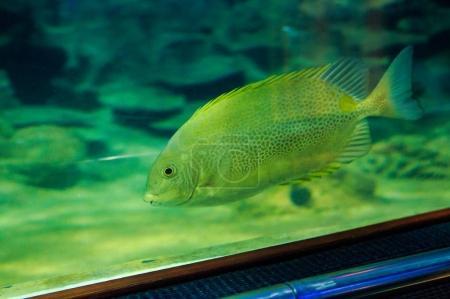 Large Fish in Oceanarium from Tourist Tube