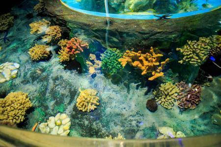 Corals on Tank Bottom in Oceanarium