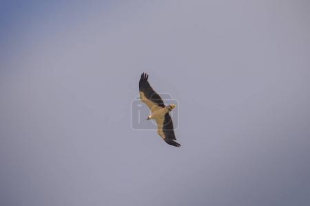 white stork bird with black flight feathers long legs and long neck flies high in blue sky