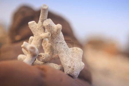 closeup white dry corals on large brown stone against flow focus rocks and blue sky in background