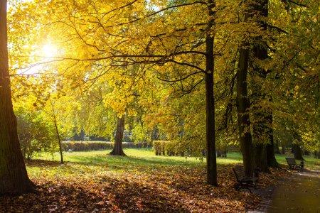 Foto de Hojas de otoño Parque amarillo en los rayos del sol. - Imagen libre de derechos