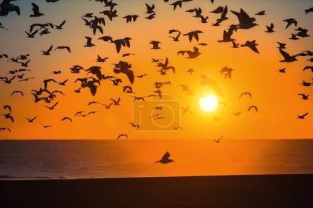 Flocks of birds above line of surf