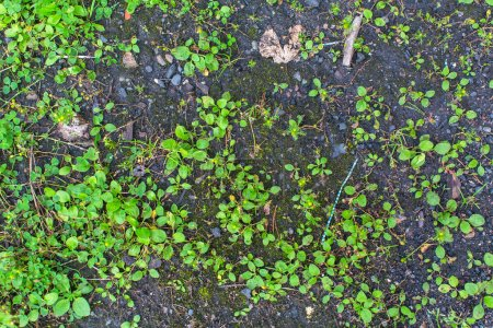 land with sprouting shoots.