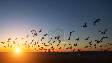 Silhouettes of flocks of gulls on the ocean beach during the amazing sunset