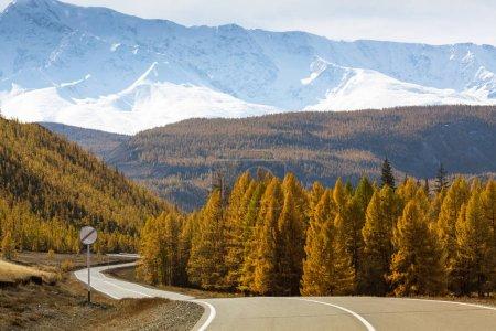 Chuysky Trakt and yellow autumn forest in the mountain North-Chuya ridge of Altai Republic, Russia.