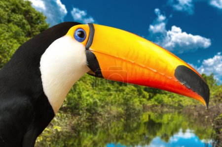 toucan with nature landscape