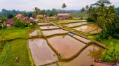 Aerial view terraces filled with water and ready for planting rice