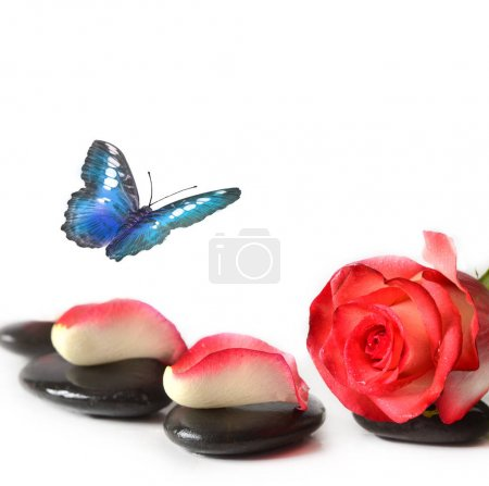 Spa stones with rose flower and butterfly on a white background.