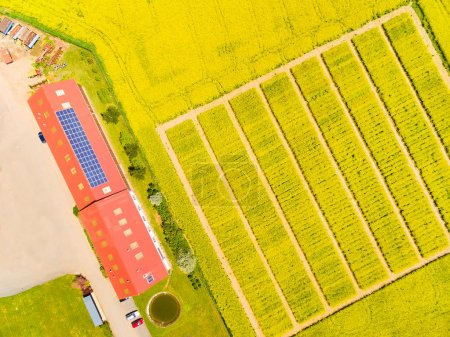 Photo pour Vue aérienne de champs expérimentaux avec des plantes de modification génétique. Paysage agricole d'en haut. - image libre de droit