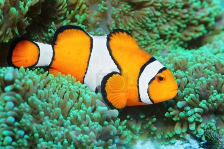 Underwater photo of tropical reef fish
