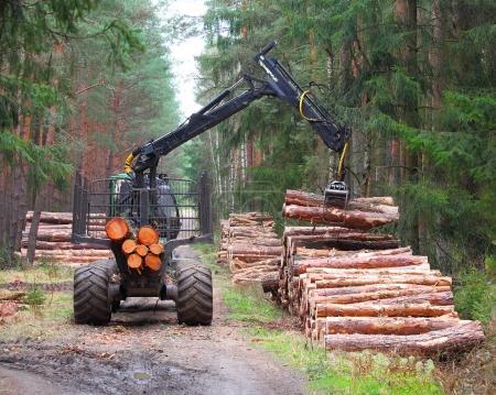 Photo pour La moissonneuse travaillant dans une forêt. Récolte de bois. Le bois de chauffage comme source d'énergie renouvelable. Thème Agriculture et sylviculture . - image libre de droit
