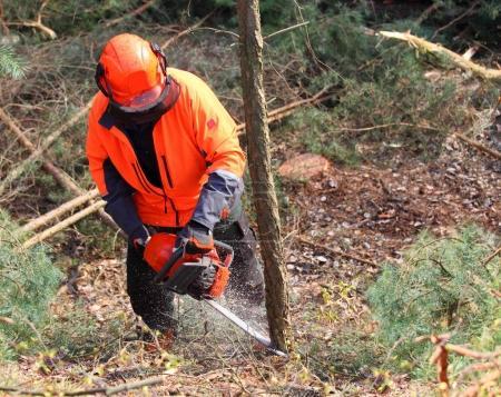 Photo pour Le bûcheron qui travaille dans une forêt. Récolte de bois. Le bois de chauffage comme source d'énergie renouvelable. Thème agriculture et sylviculture. Personnes au travail . - image libre de droit