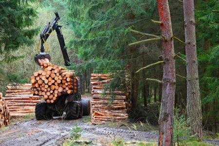 Photo pour La moissonneuse travaillant dans une forêt. Récolte de bois. Bois de chauffage comme source d'énergie renouvelable. Thème de l'agriculture et la foresterie. - image libre de droit