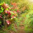 Footpath trough rainforest in early morning. First...