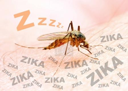 Sucking mosquito on skin.