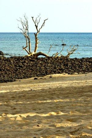 dead tree seaweed
