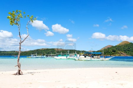 Photo for In the philippines island beautiful cosatline tree hill and boat for tourist - Royalty Free Image