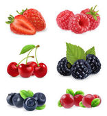 Forest berry Sweet fruit Realistic illustration 3d vector icon set