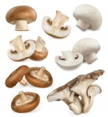 Edible mushrooms Shiitake oyster cremini white button 3d vector icons set