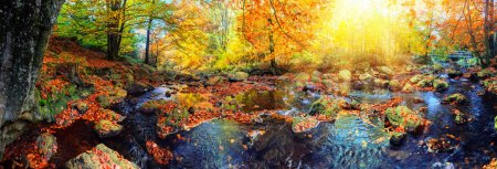 Photo pour Panoramique paysage d'automne avec les cours d'eau forestier sur une journée ensoleillée d'automne. Fond de nature automne - image libre de droit