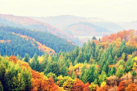 Photo pour Paysage d'automne avec des arbres d'automne colorés. Vue de dessus, aérienne. Automne nature fond - image libre de droit