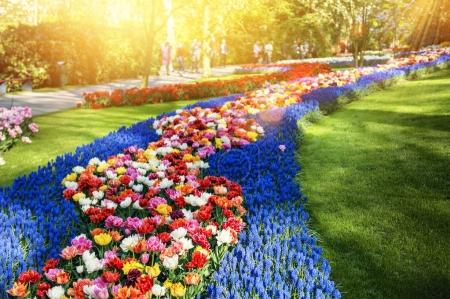 Multicolor flowers in park