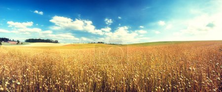 Agricultural landscape with flax seed field