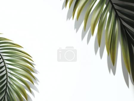 Two palm branches. 3d rendering