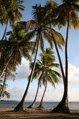 Palm Trees on seashore