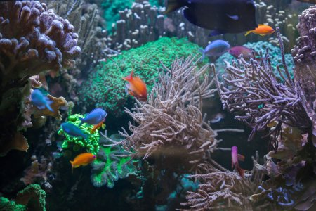 Tropical fish at the Great Barrier Reef.