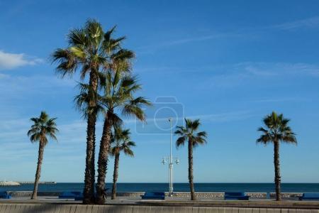 Photo pour Palmiers sur le front de mer à Málaga, Costa del Sol, Andalousie, Espagne. - image libre de droit