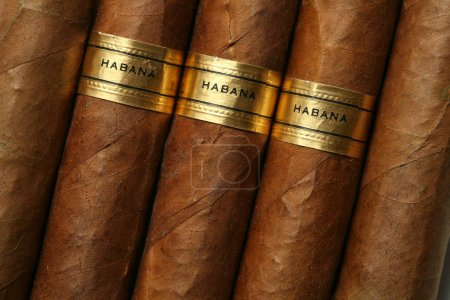 Closeup of Havana cigars with golden badges