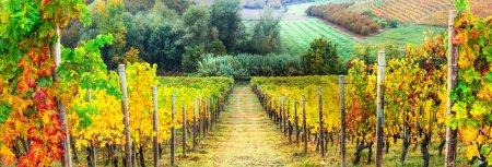 Filas doradas de viñedos. Paisaje de otoño. Italia