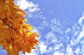 """Постер, картина, фотообои """"Осенний пейзаж с яркими красочными листьями. Бабье лето."""""""
