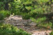 Curvy rocky path in the forest