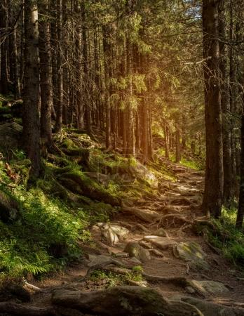 Photo pour Sentier de montagne dans la forêt, les racines des arbres, printemps. HDR foto - image libre de droit