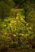 """Постер, картина, фотообои """"Живых цветов фона. Удивительный вид природа Буша Весенние цветы в саду"""""""