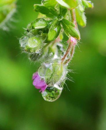 Photo pour Belle fleur macro colorée fleur sauvage floral au printemps fond flou fleurs sauvages dans le jardin botanique pétale blanc rose frais - image libre de droit