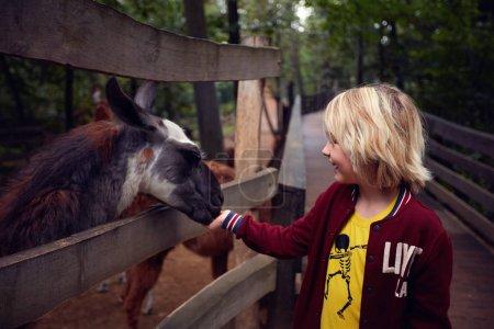 Photo pour Étonné heureux jeune garçon nourrit lama des mains à la ferme animale, zoo - image libre de droit