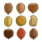 Vector Set Nuts Logo