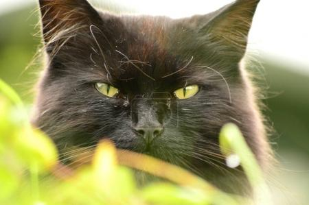 Black hunter in the undergrowth
