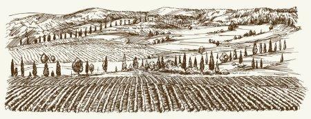 Illustration for Wide view of vineyard. Vineyard landscape panorama. Hand drawn illustration. - Royalty Free Image