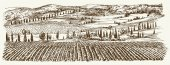 Wide view of vineyard Vineyard landscape panorama Hand drawn i